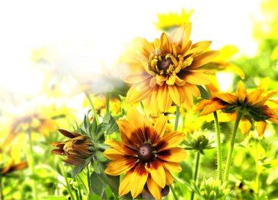 Adesivo kwiaty