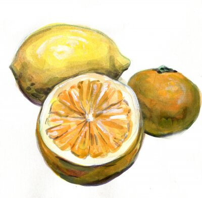 Adesivo Laranja, limão, tangerina. Frutas citricas. Pintura da aguarela
