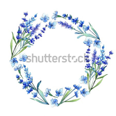 Adesivo Lavanda azul. Flor botânica floral. Quadro de flores silvestres Primavera folha de flores silvestres em estilo aquarela. Wildflower do Aquarelle para o fundo, a textura, o teste padrão do envoltório,