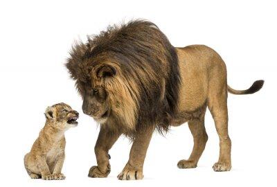 Adesivo Leão em pé e olhando um filhote de leão