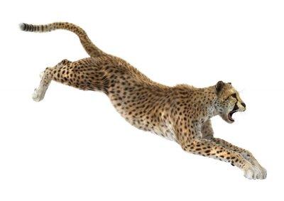 Adesivo Leopardo