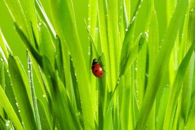 Adesivo linda joaninha na grama verde