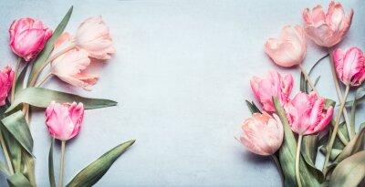 Adesivo Lindas tulipas em cor pastel rosa no fundo azul claro, vista superior, quadro, borda. Adorável cartão com tulipas para dia das mães, casamento ou evento feliz