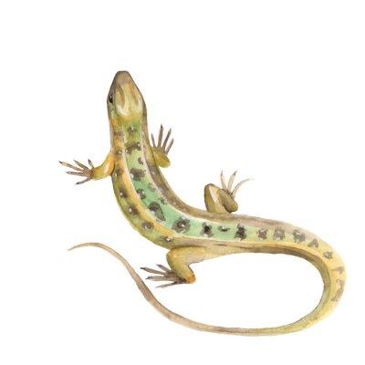 Adesivo Lizard. Watercolor illustration in vector
