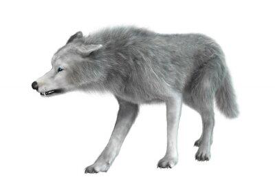 Adesivo Lobo polar no branco