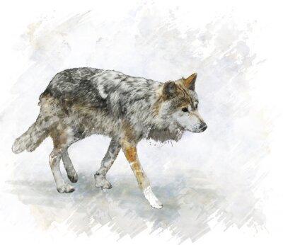 Adesivo Lobo Watercolor