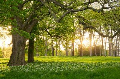 Adesivo Luz solar na primavera floresta verde