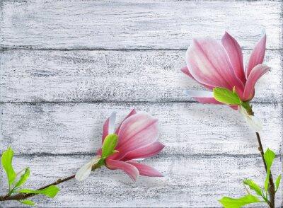 Adesivo Magnólia, flores, fundo, gasto, madeira, tábuas