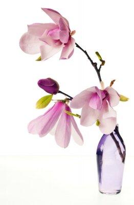 Adesivo Magnolia Jane Flores
