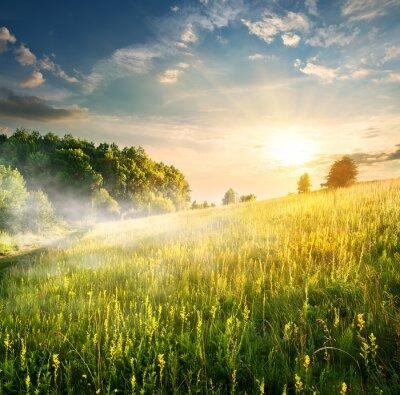 Adesivo Manhã sobre campo de florescência