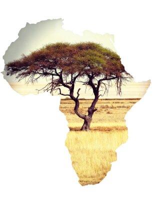 Adesivo Mapa, áfrica, continente, conceito, acácia