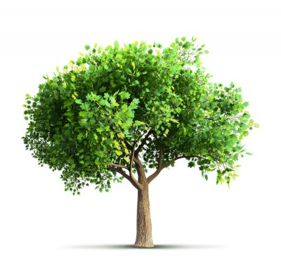 Adesivo Maple, árvore, isolado