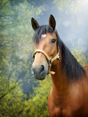 Adesivo Marrom, cavalo, nascente, paisagem