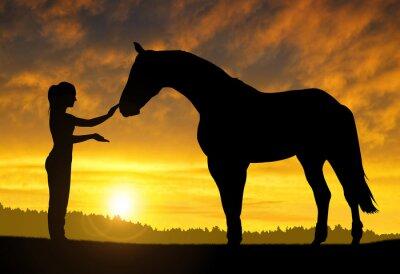 Adesivo Menina com um cavalo no por do sol
