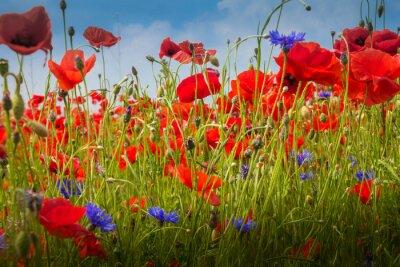 Adesivo Mohnblumen - O campo da papoila