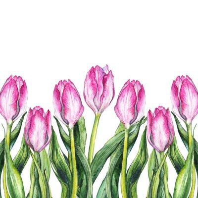 Adesivo Moldura cor-de-rosa da beira da natureza da flor da tulip