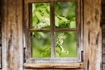 Adesivo Moldura de madeira velha da janela, mola, árvores de florescência.