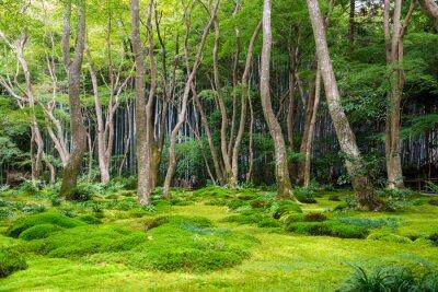 Adesivo Moss, jardim, vista, Arashiyama, Kyoto