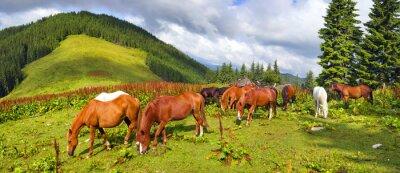 Adesivo Mustangs dos Cárpatos em Gorgany