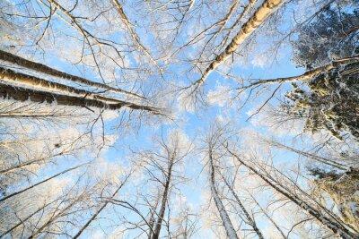 Adesivo Neve, coberto, árvore, perspectiva, vista, olhar, cima