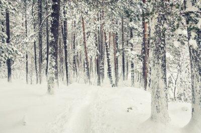 Adesivo Neve na floresta do inverno.