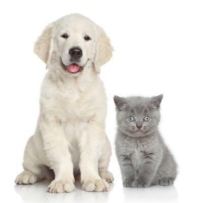 Adesivo O gato eo cão juntos