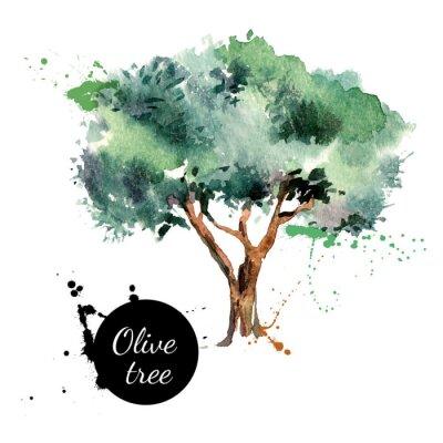 Adesivo Olive tree vector illustration. Hand drawn watercolor painting