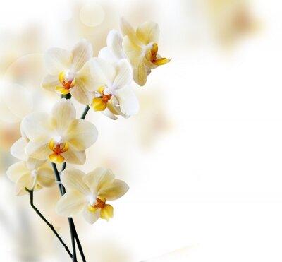 Adesivo Orquídea branca bonita