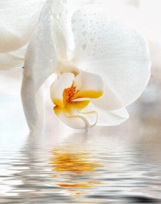 Adesivo Orquídea branca. Close up com reflexão na água.