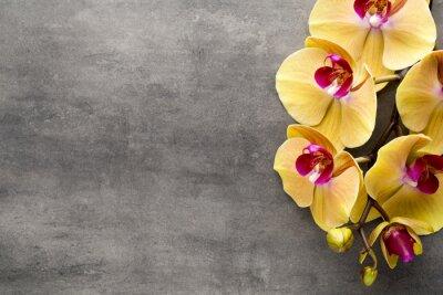 Adesivo Orquídea cor-de-rosa bonita em um fundo cinzento.