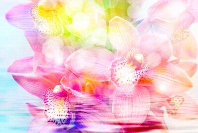 Adesivo Orquídea, flor, fim, cima