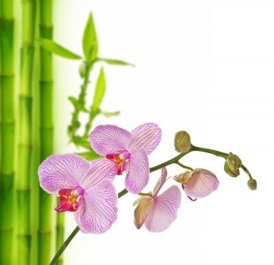 Adesivo orquídea rosa e bambu - fundo spa
