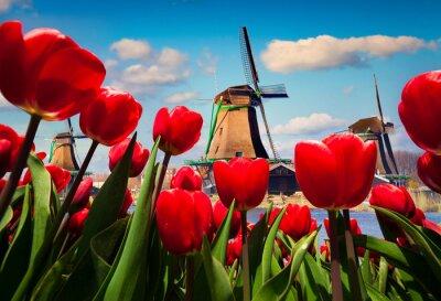 Adesivo Os famosos moinhos de vento holandeses