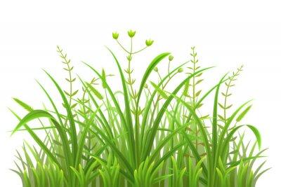 Adesivo Padrão de grama verde no fundo branco