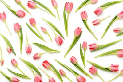 Adesivo Padrão de tulipa rosa sobre o bacjkground branco.