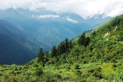 Adesivo Paisagem, montanha, floresta, vale