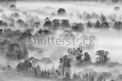 Adesivo Paisagem preto e branco, a floresta nublada, Itália