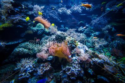 Adesivo paisagem subaquática de recifes de corais com peixes coloridos