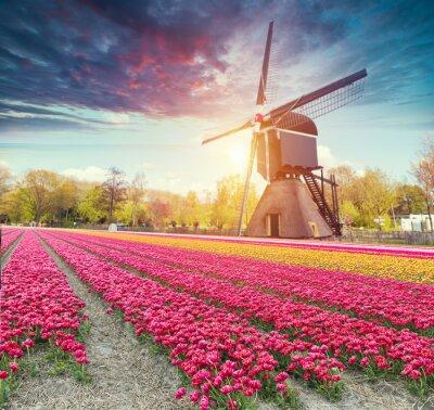 Adesivo Países Baixos