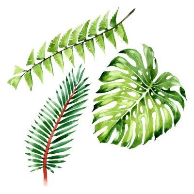 Adesivo Palm beach tree leaves jungle botanical. Watercolor background illustration set. Isolated leaf illustration element.