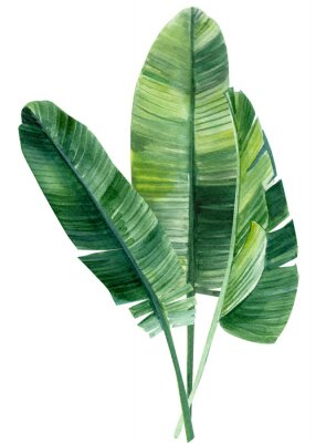 Adesivo palm tree, leaves of tropical forests on an isolated white background, watercolor illustration