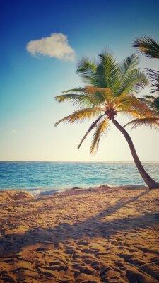 Adesivo Palma, árvore, tropicais, ilha