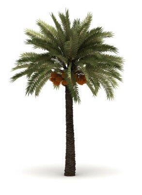 Adesivo Palmeira Única
