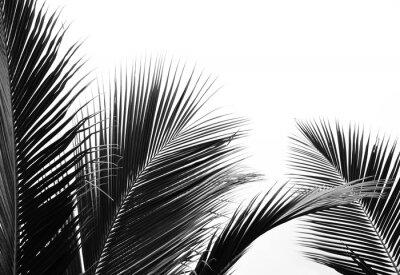 Adesivo palms leaf on white background