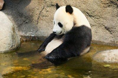 Adesivo Panda gigante sentado na água