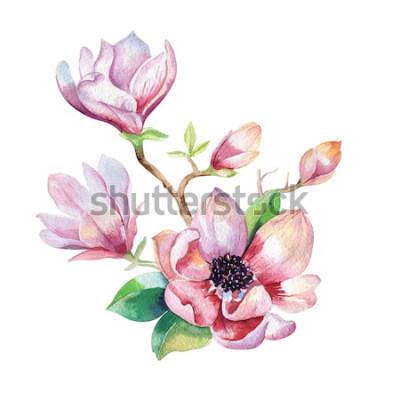 Adesivo Papel de parede da flor da magnólia da pintura. Mão desenhada aquarela floral ilustração. Elemento natural decorativo de flor. Fundo de watecolour arte vintage.