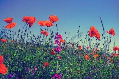 Adesivo Papoila floresce contra o céu
