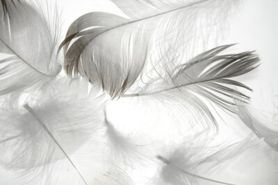 Adesivo Pássaro, pena, branca, fundo, fundo, desenho