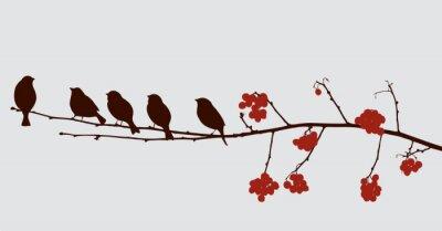 Adesivo Pássaros, Rowan, ramo