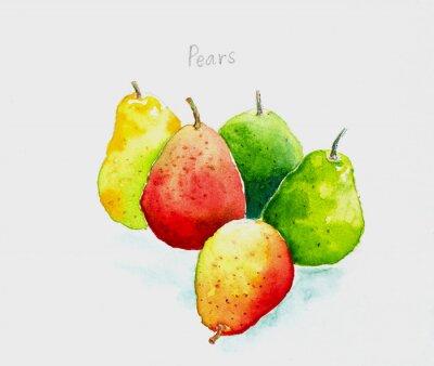Adesivo pears'watercolor painted